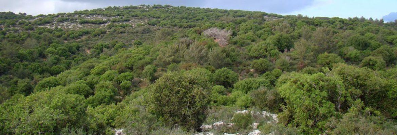 Carmel National Park, Haifa District, Israel
