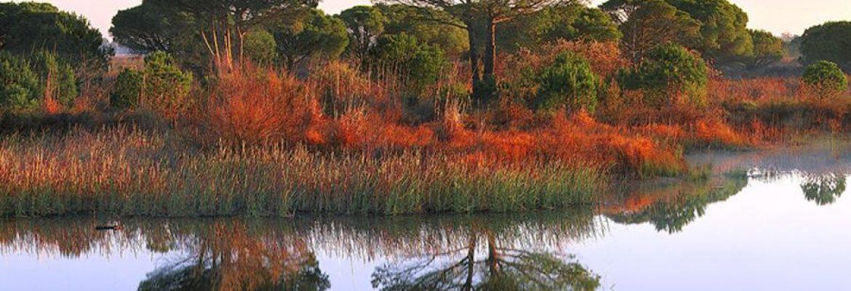 Doñana National ParkAlmonte, Huelva, Spain