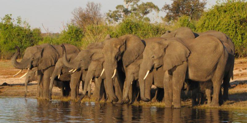 Quiçama National Park, Angola