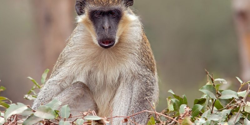 Abuko Nature Reserve, Gambia