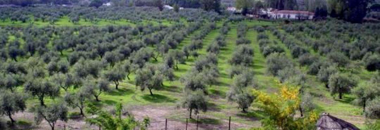 Oleoturismo Jaén – Oleícola San Francisco S.L.,Begíjar, Jaén, Spain