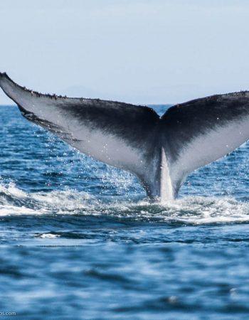 Whale Watching Tarifa