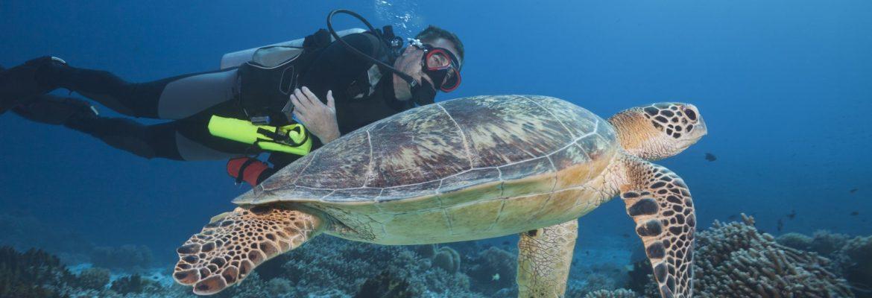 Tubbataha Reefs Natural Park, UNESCO SITE,Puerto Princesa, Palawan, Philippines