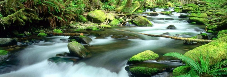 Daintree Rainforest, QLD, Australia